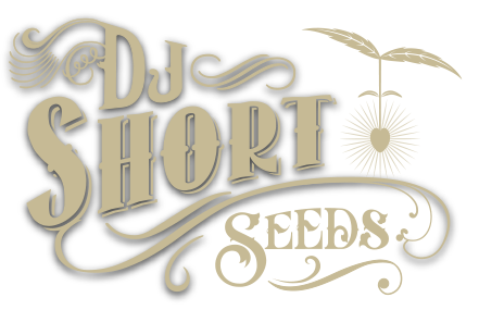 DJ Short Seeds