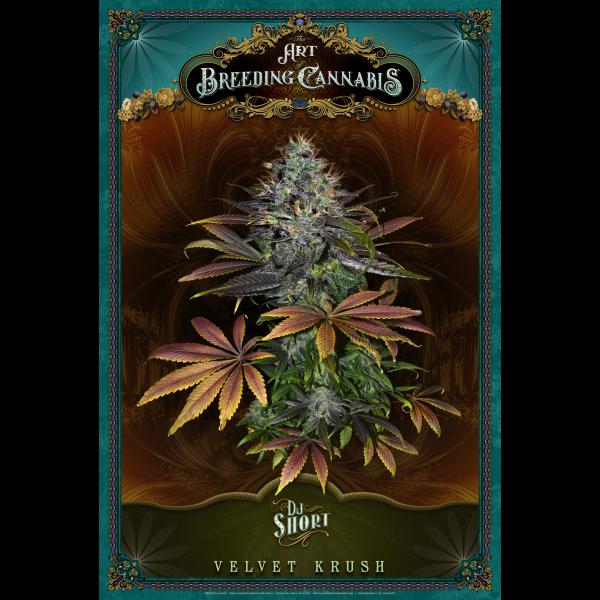 Velvet Krush Poster